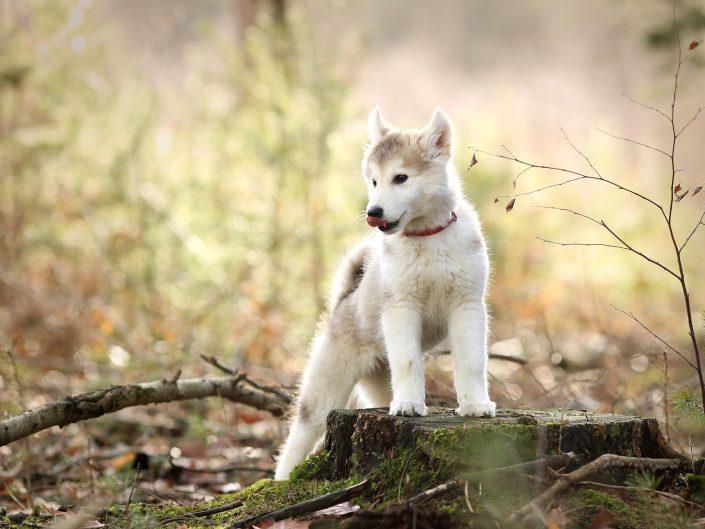 Hondenfotografie in de natuur